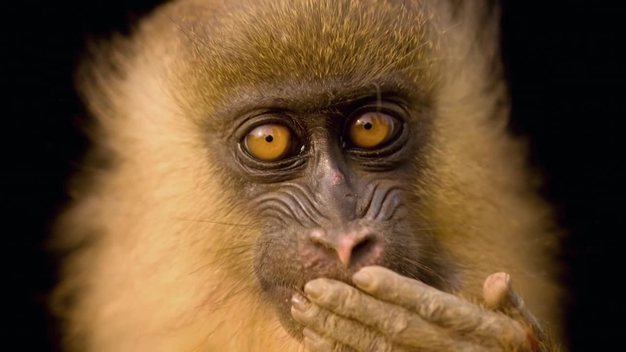 Thumbnail for National Geographic Photo Ark Steiff Partnership