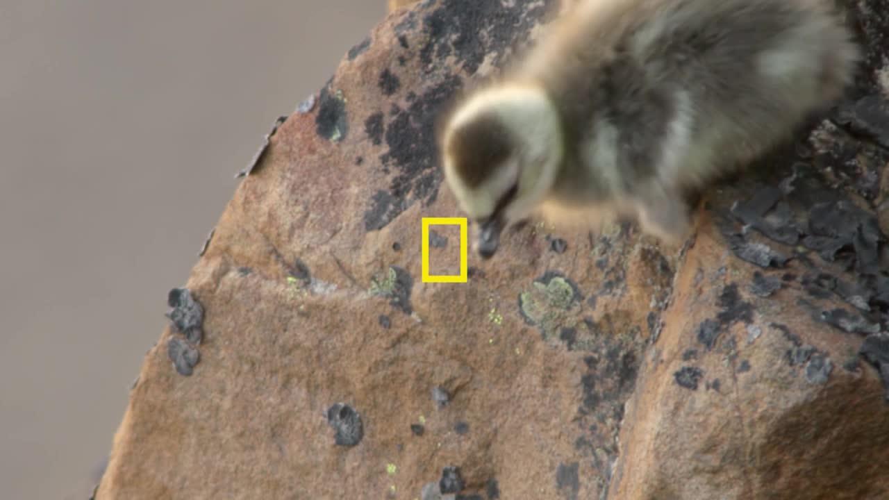 """Thumbnail for  Hostile Planet Tweet Spot (90 w"""")"""