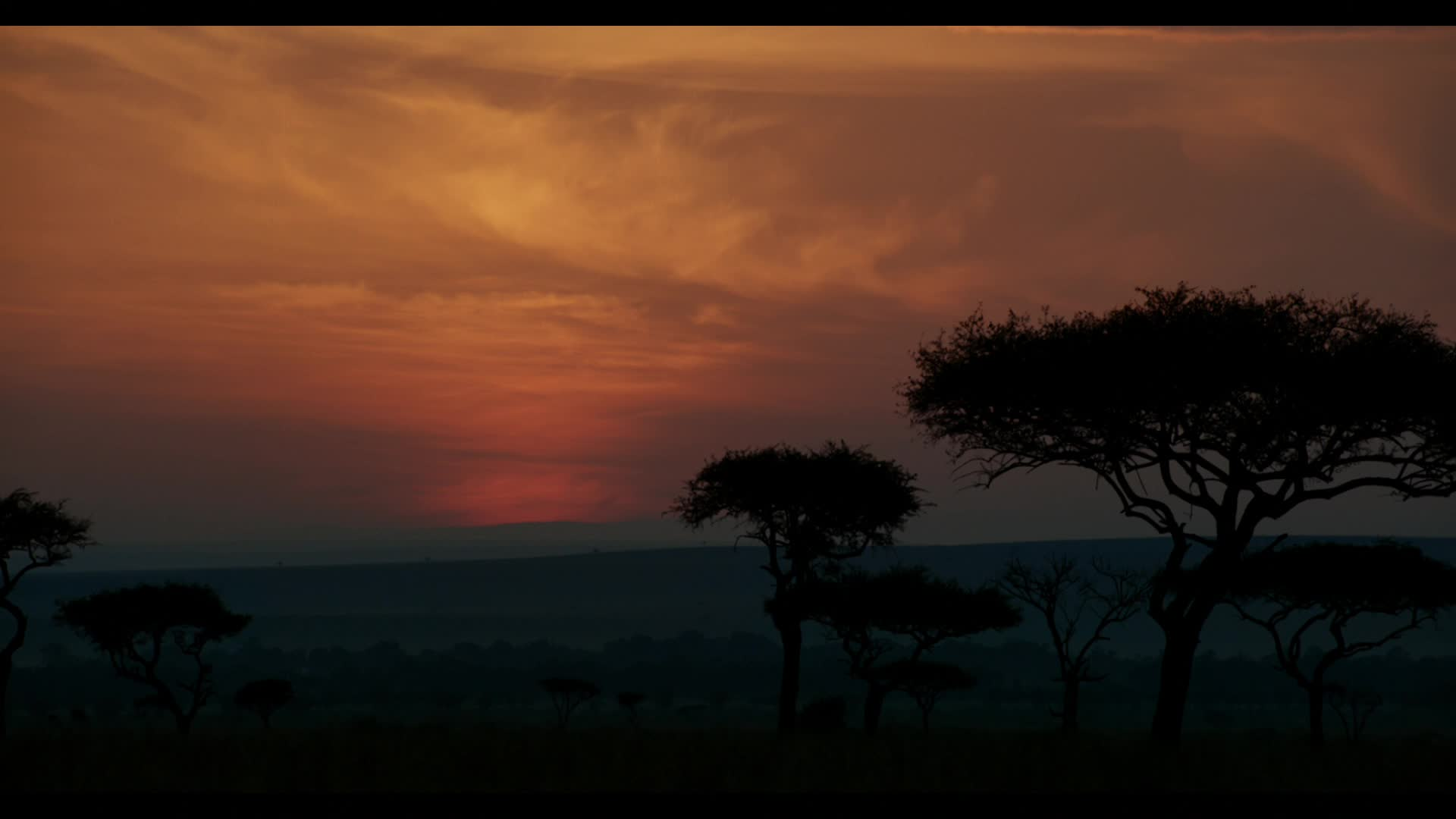 Thumbnail for The Lion King,