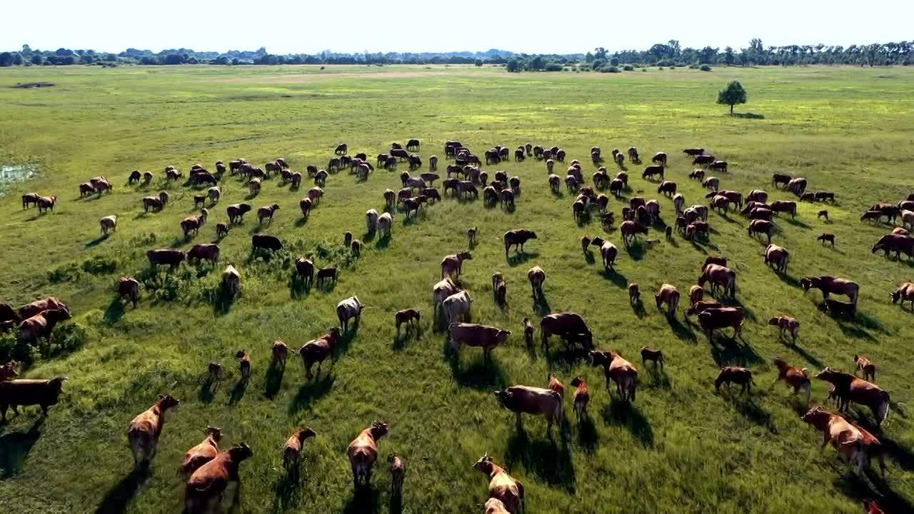 Thumbnail for BK Cows' Menu
