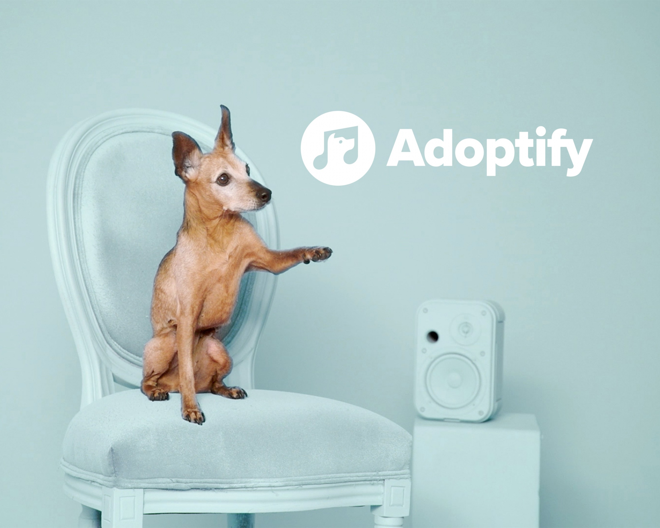 Image Media for Adoptify