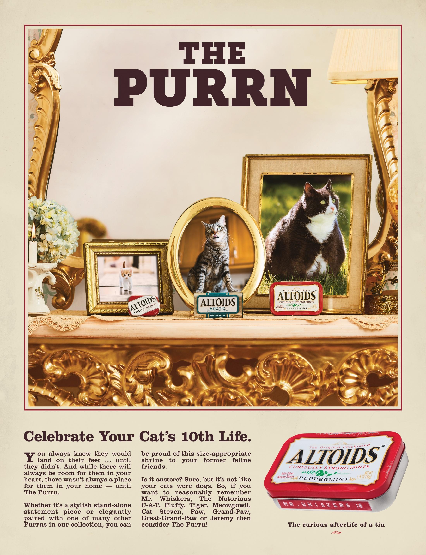 Thumbnail for Purrn