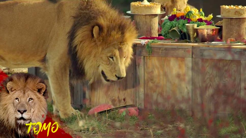 Thumbnail for Nat Geo WILD's Savage Thanksgiving (Facebook Live)