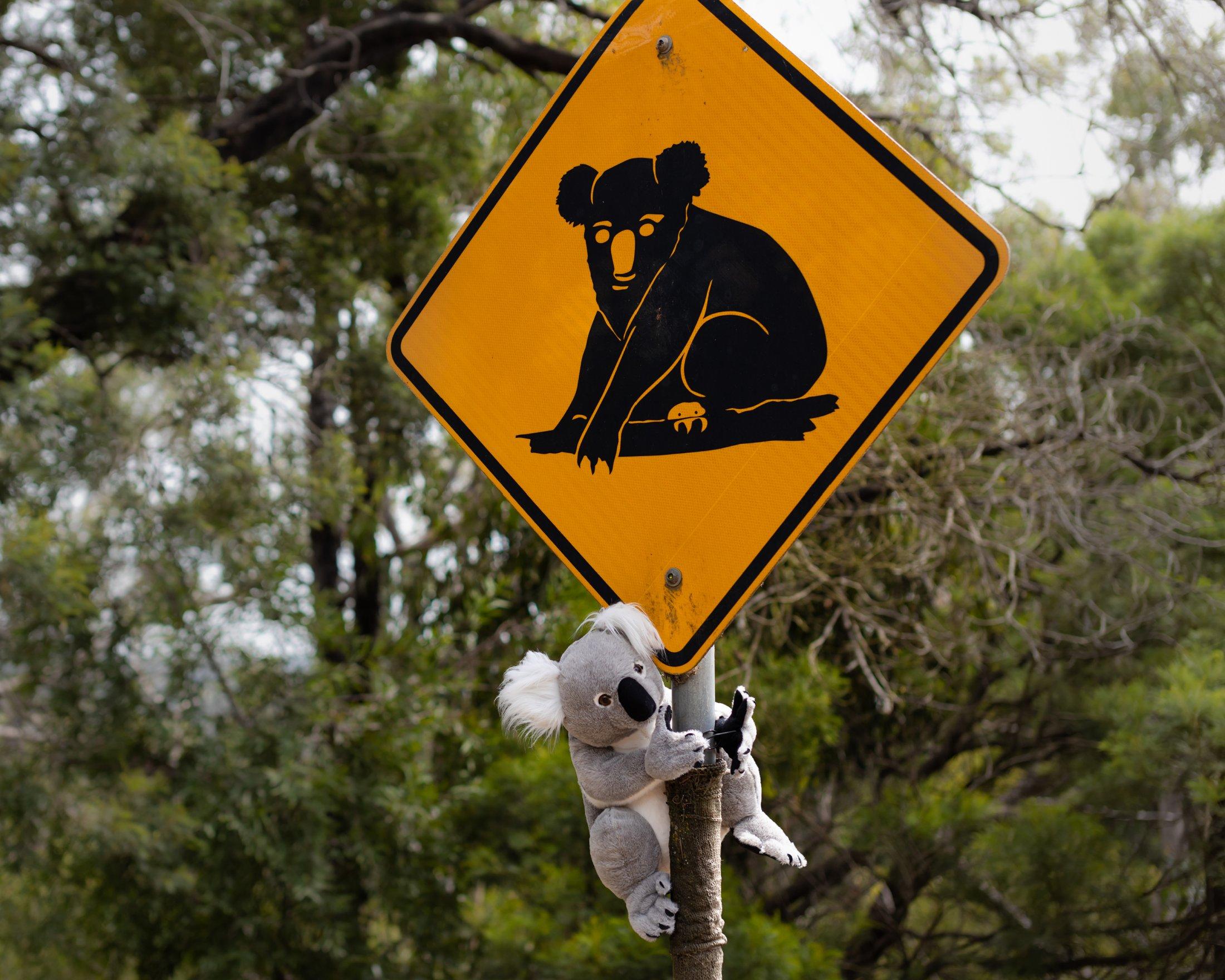Thumbnail for World Rallies To Save Australian Wildlife