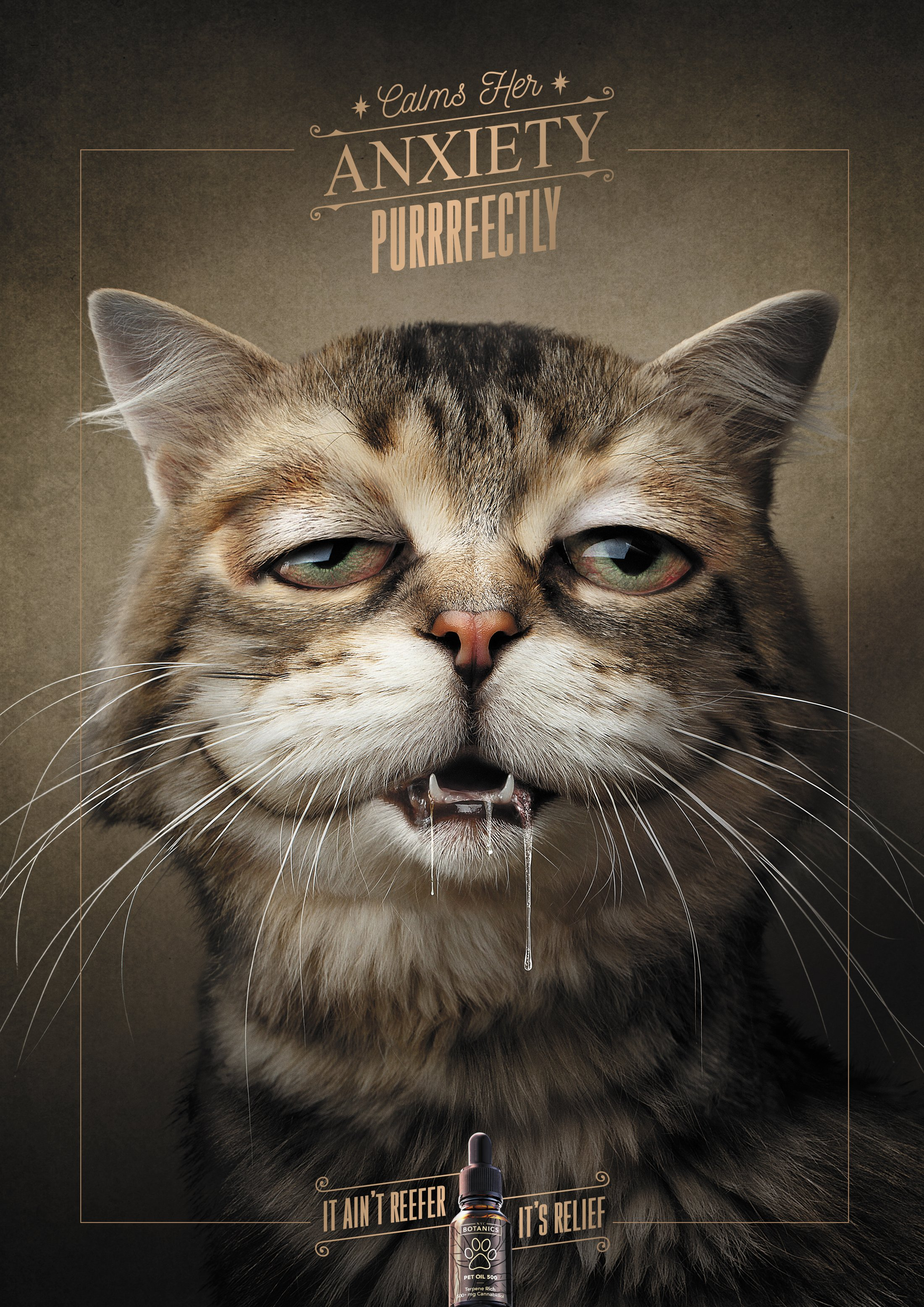 Thumbnail for Cat