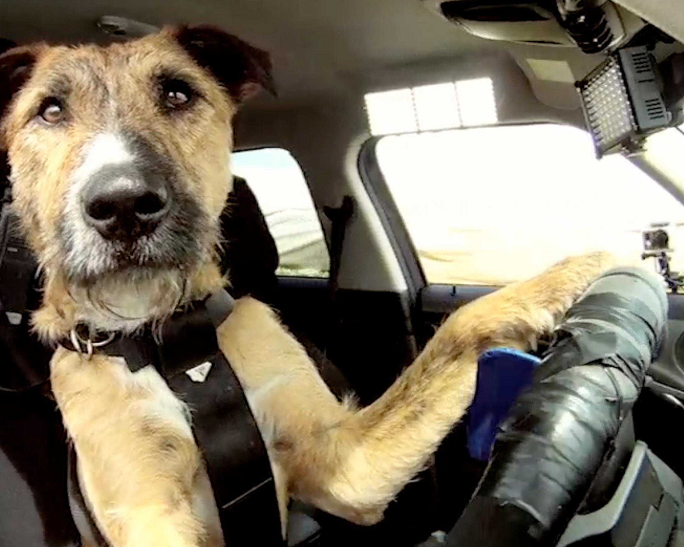 Thumbnail for Driving Dogs