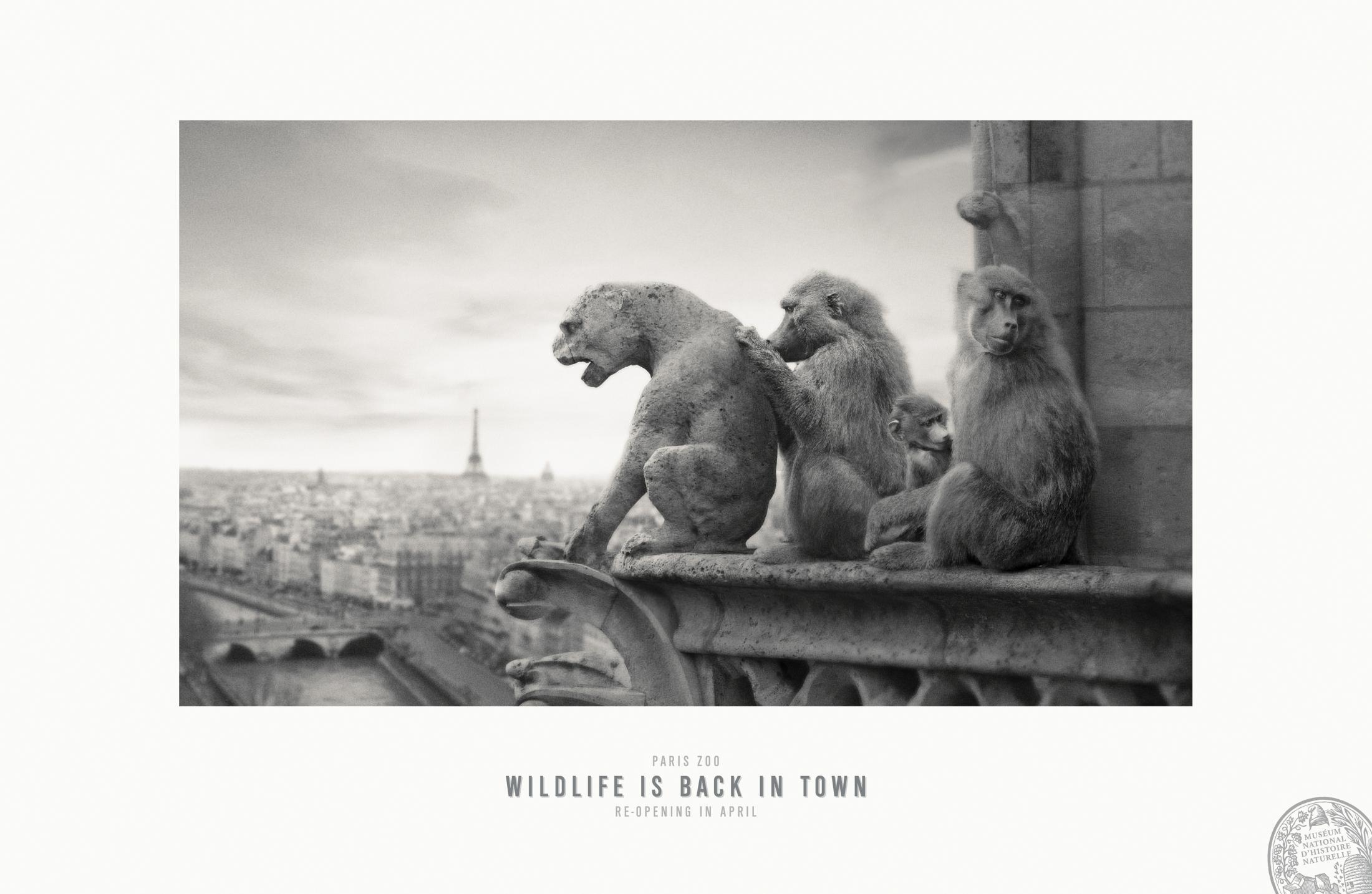 Thumbnail for Notre Dame de Paris