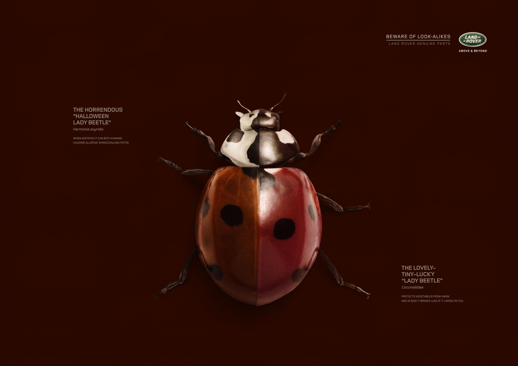 Thumbnail for Beetle