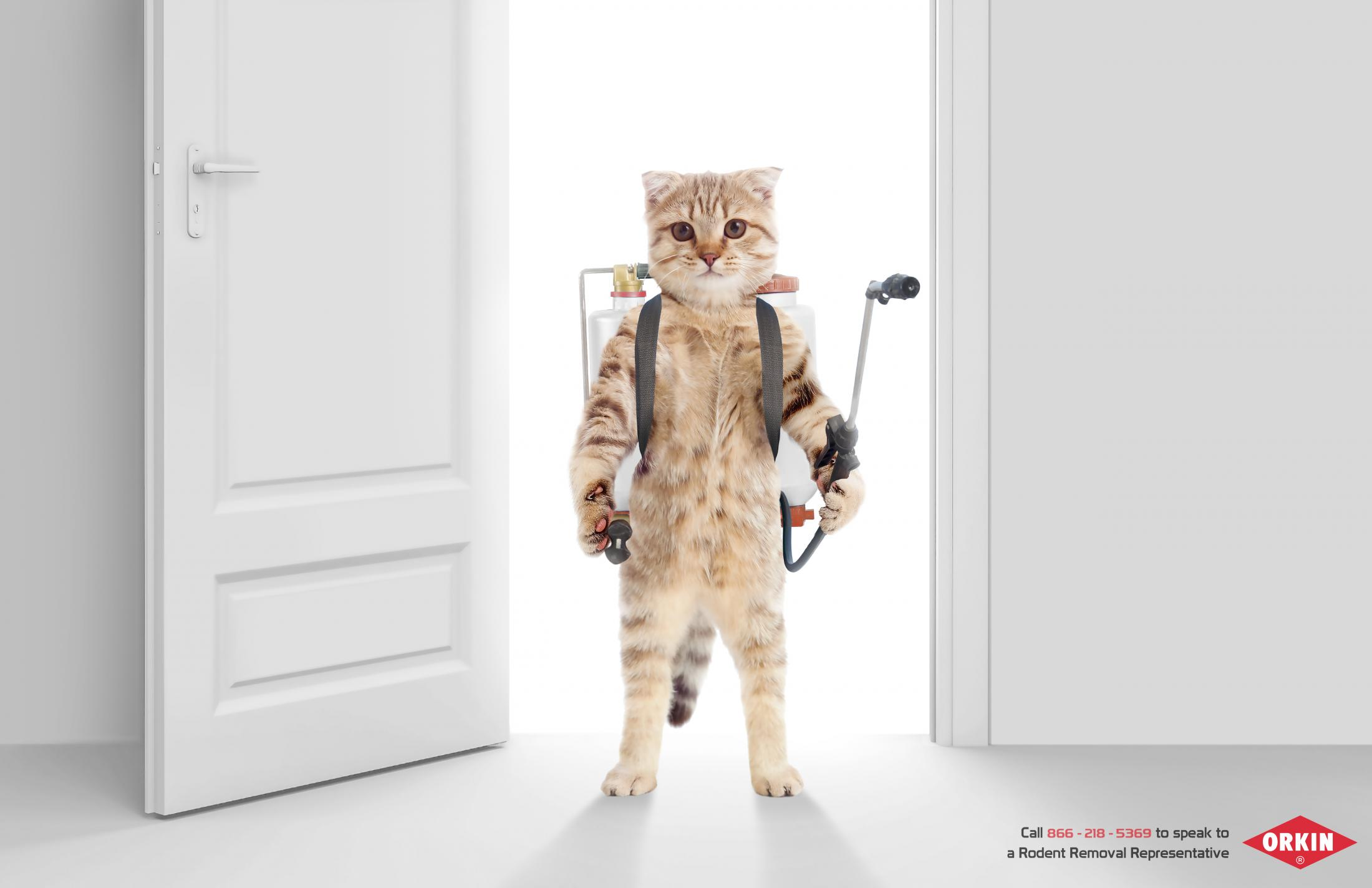 Orkin - The Pest Control Experts1
