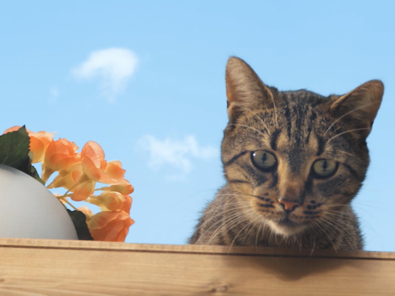 Tenacious Cat Thumbnail