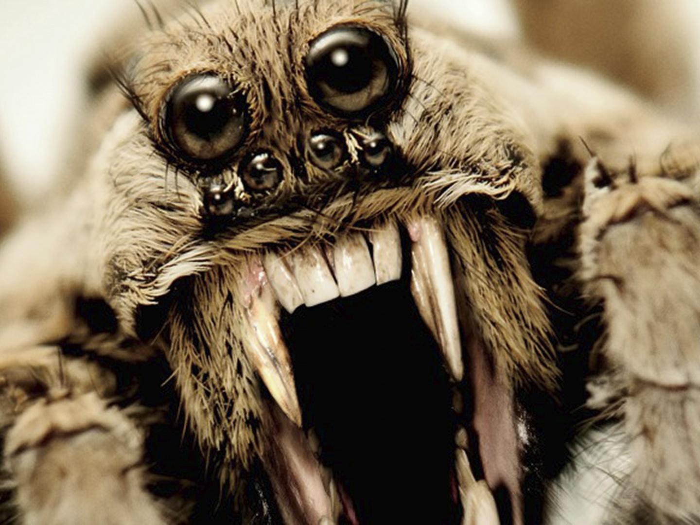 American Horror Story - Roanoke teaser billboard (wolf spider) Thumbnail