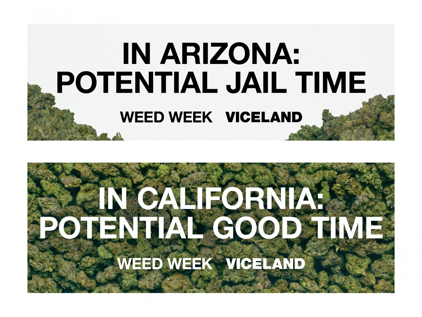 VICELAND On The Border Of Marijuana Legislation Thumbnail