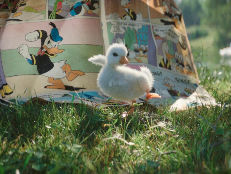The little duck Thumbnail