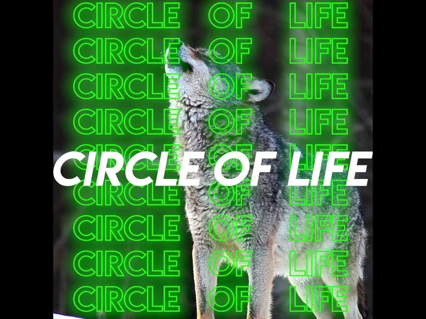 Most Expensivest - Circle of Life Thumbnail