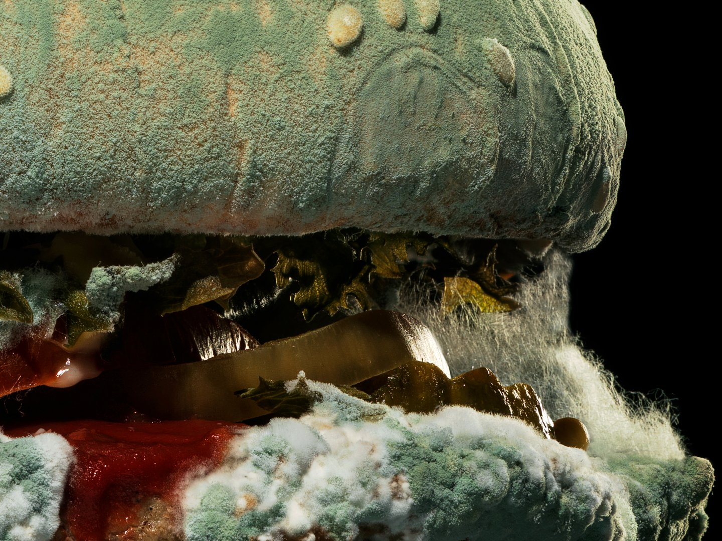 Image for BK Moldy Whopper