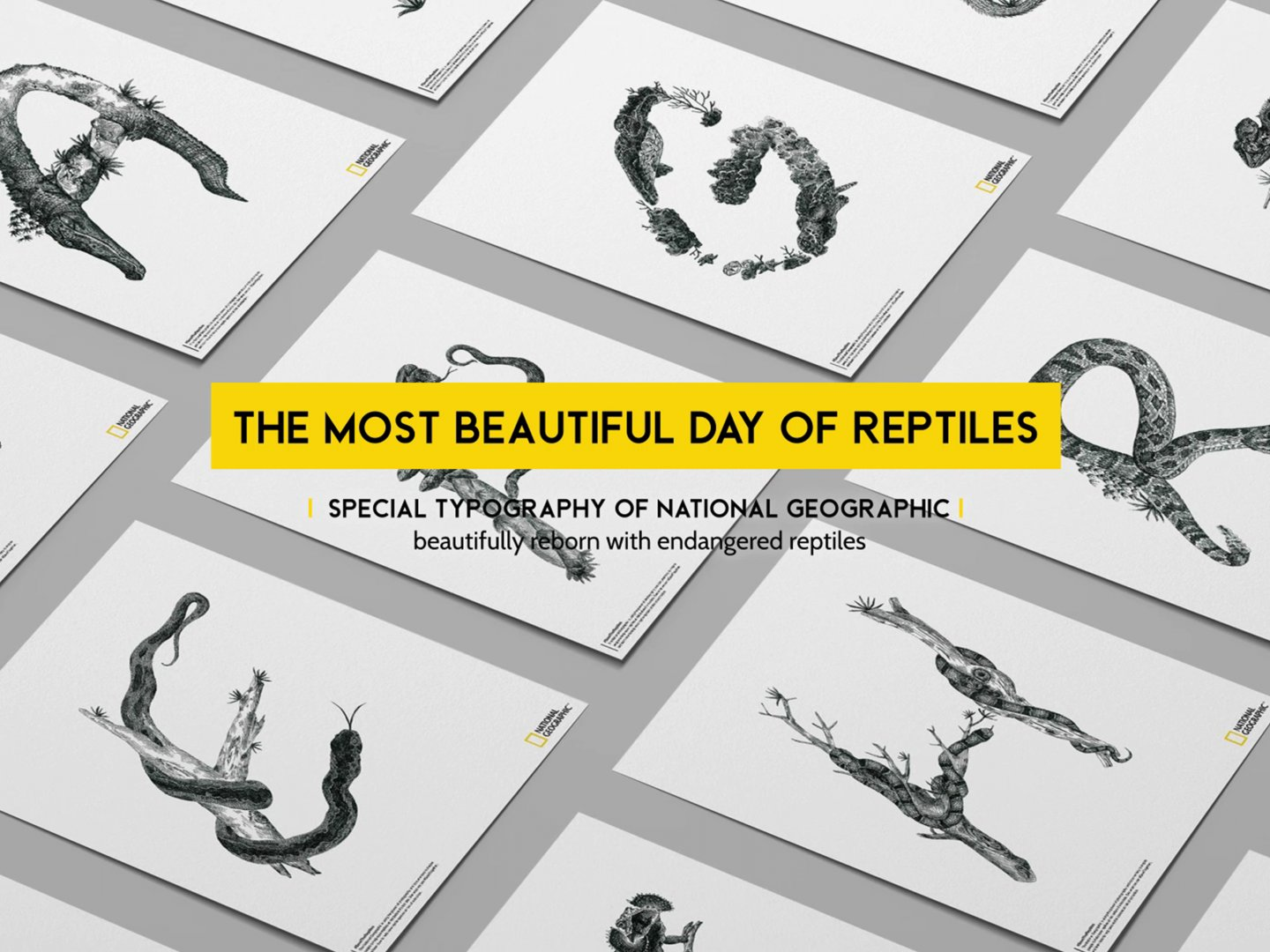 The Most Beautiful Day Of Reptiles Thumbnail