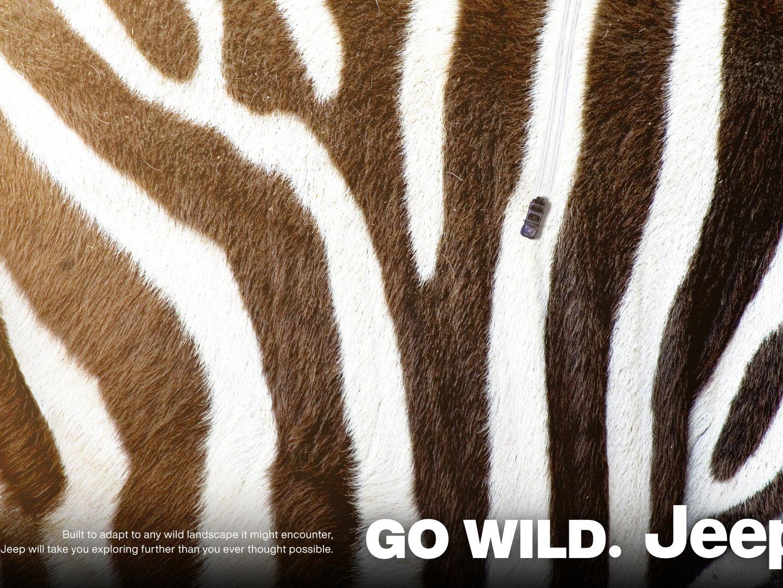 Go Wild 2: Zebra Thumbnail