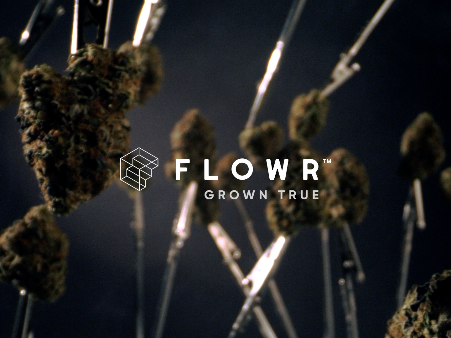 The Flowr Corporation: Nothing Special   Flowr BC Pink Kush