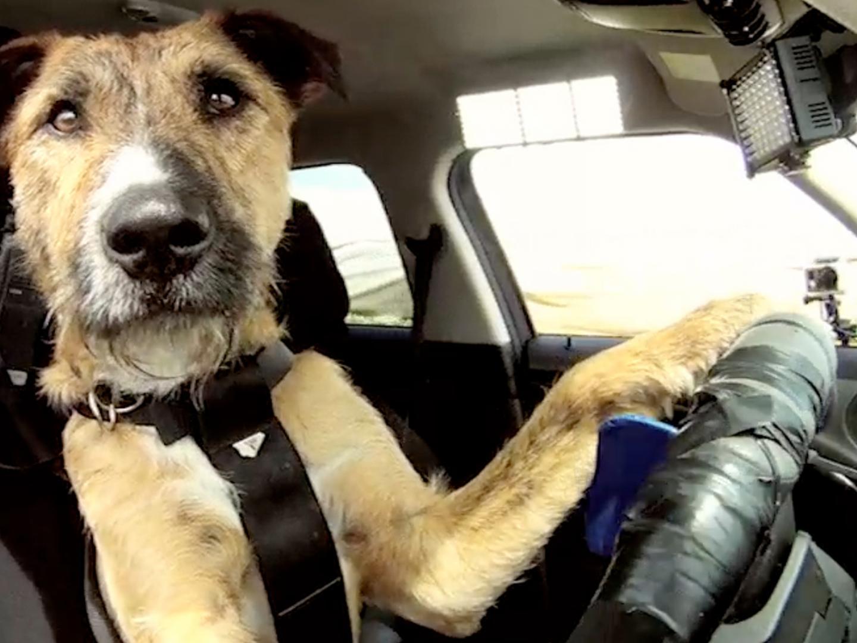 Driving Dogs Thumbnail