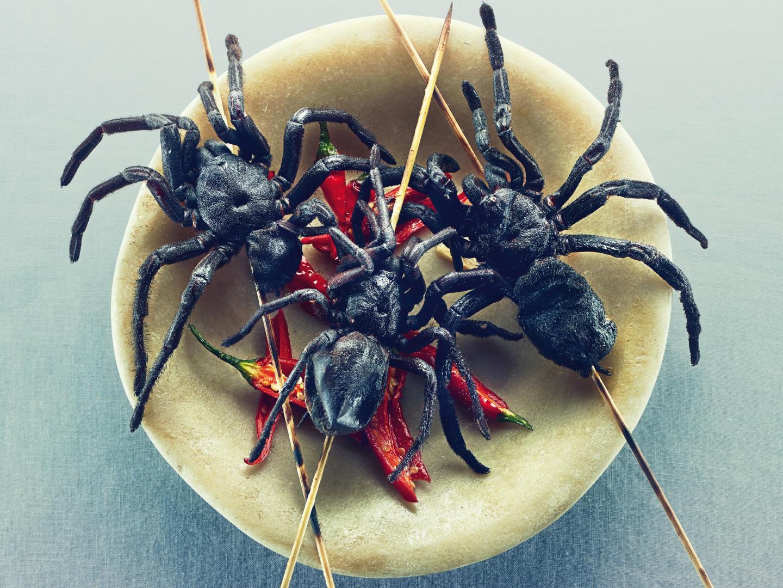 Image for Goliath Tarantula