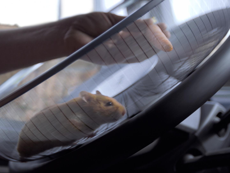 The Hamster Thumbnail