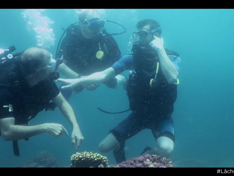 The Diver Thumbnail