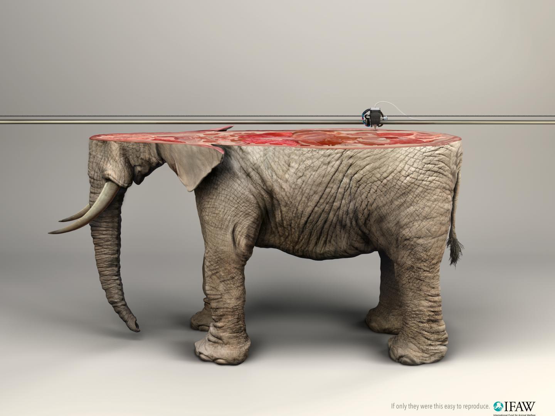 3D printer/ Elephant Thumbnail