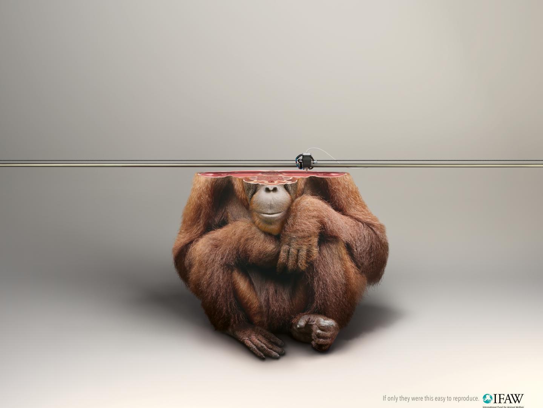 3D Printer/orangutan Thumbnail