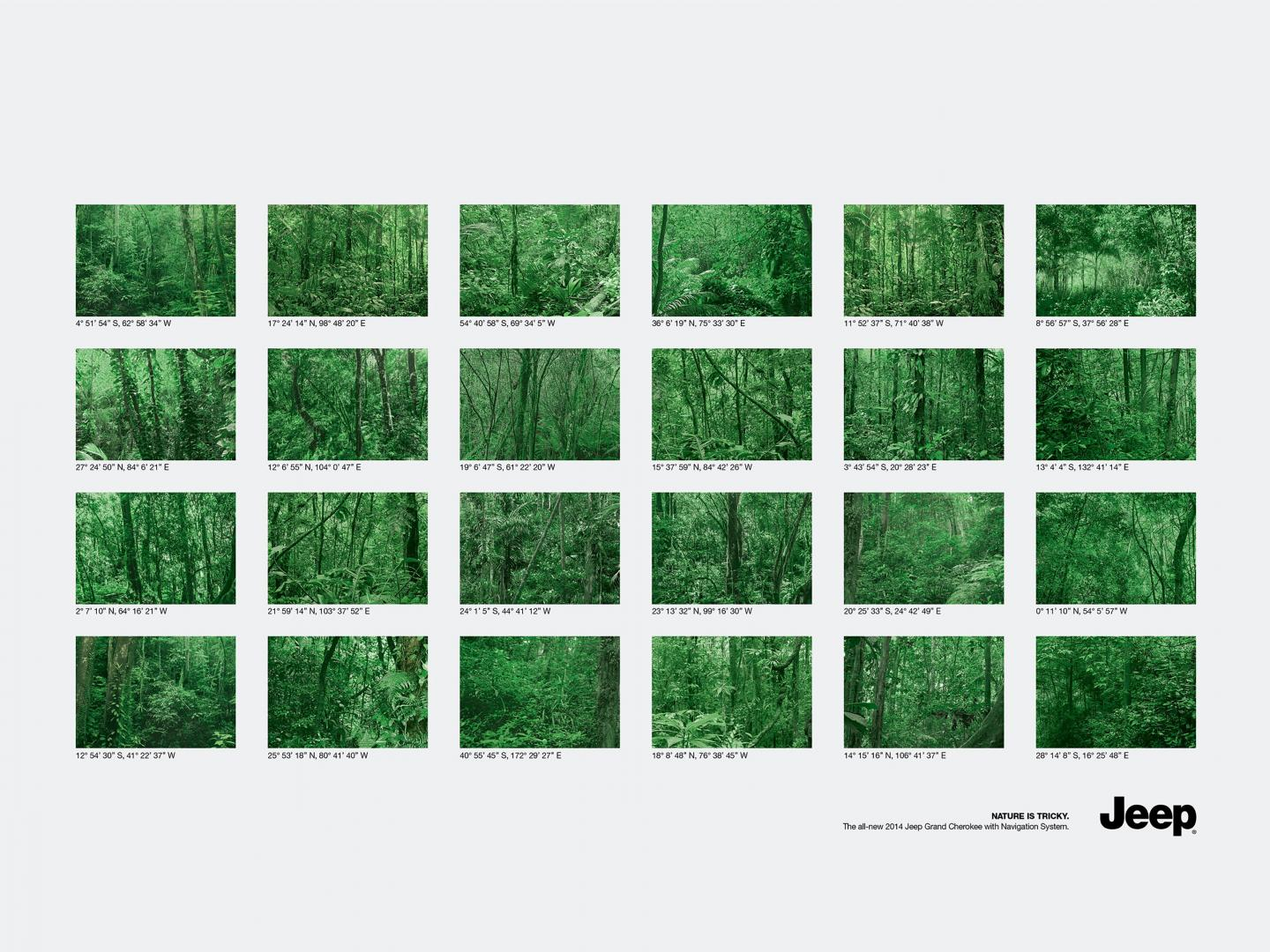 Forests  Thumbnail