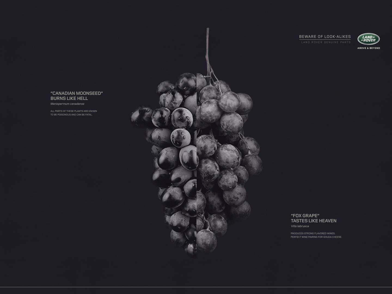 Image for Grape