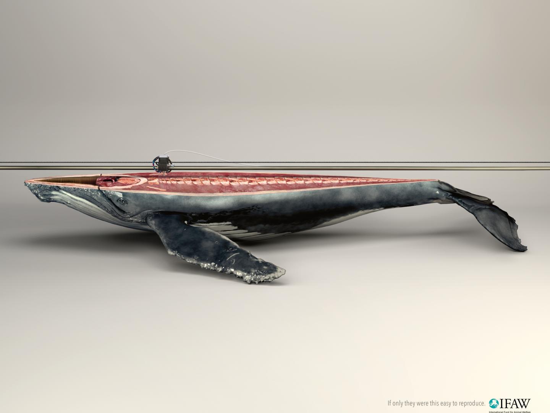 3D Printer/whale Thumbnail