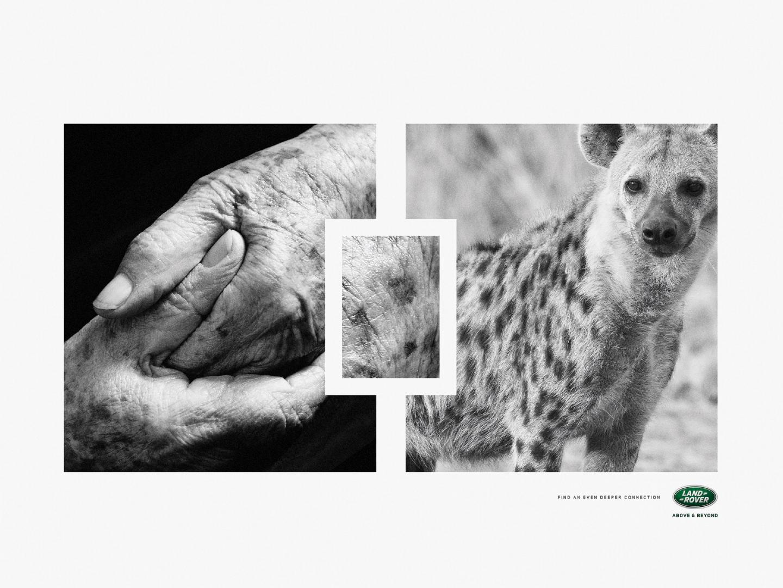 Hyena Thumbnail