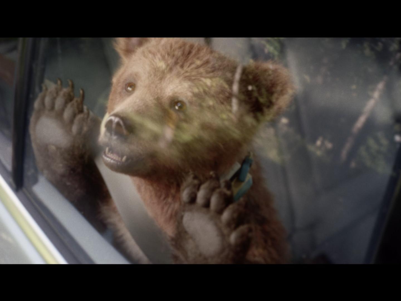 Bears Thumbnail