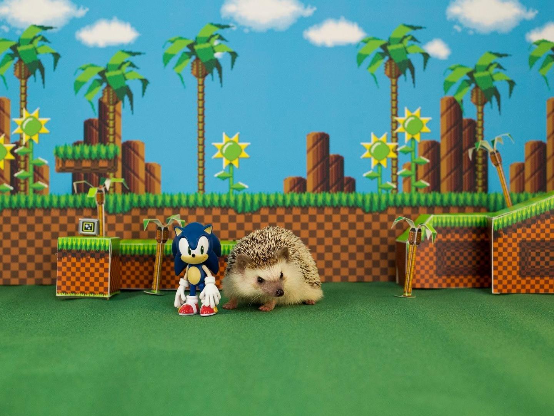 Happy Hedgehog Day Thumbnail