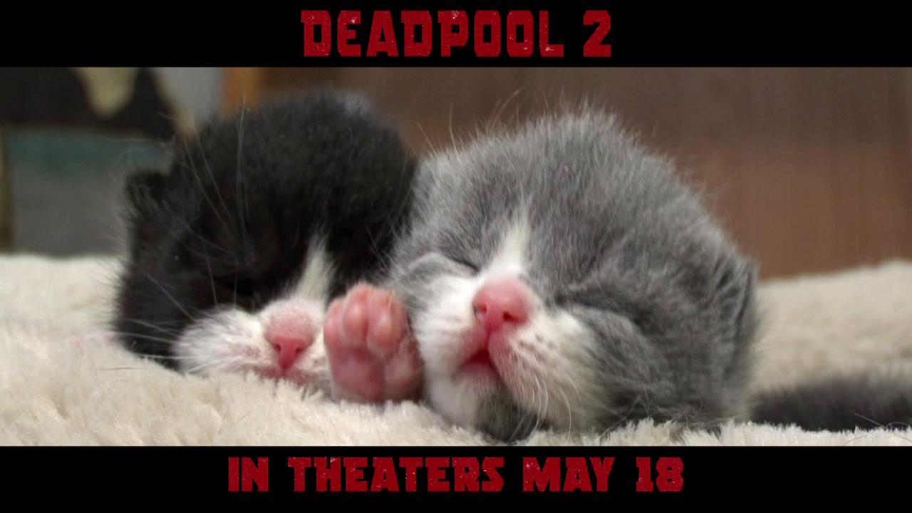 Thumbnail for Kittens / DMV